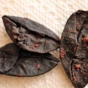 Garcinia indica Powder