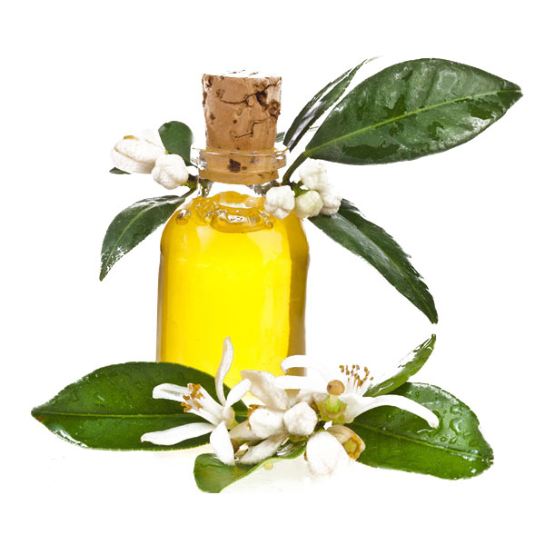 Amyris-oil