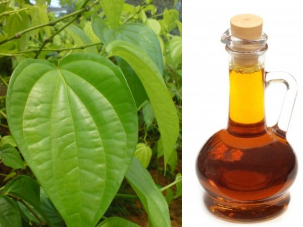Betal Leaf Oil