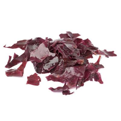 Purple Dulse 1
