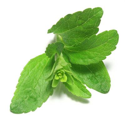 Supplements Global LLC - Best B2B dietary supplement company Solidago Canadensis Leaf