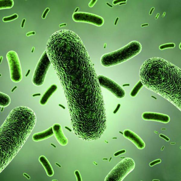 bacillus-clausii
